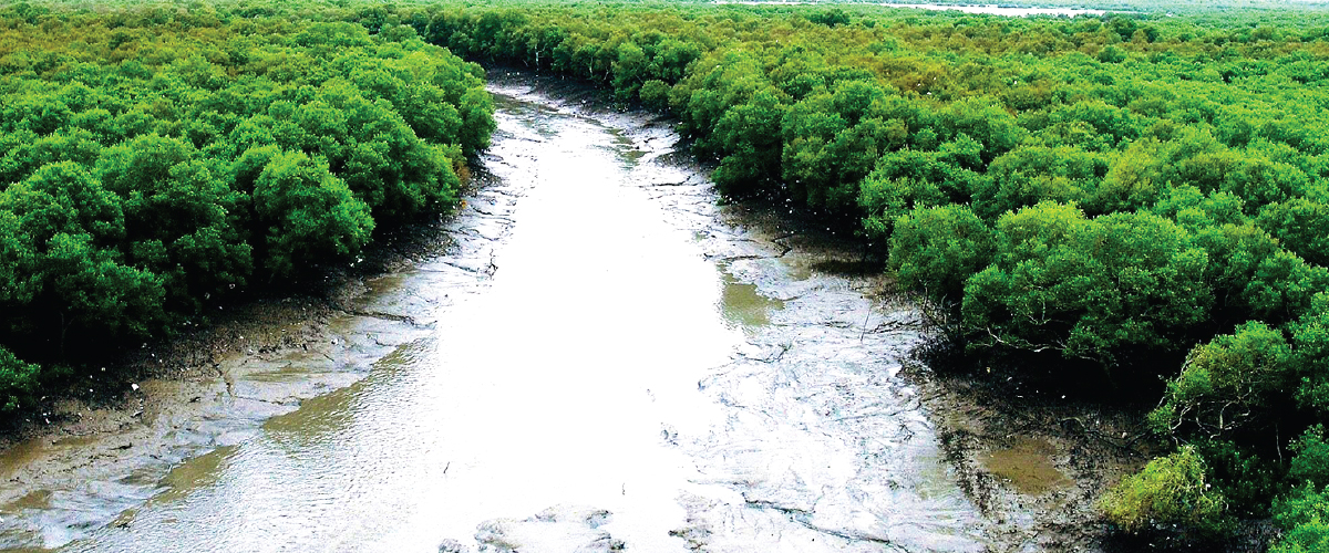 Quiz for Mangroves